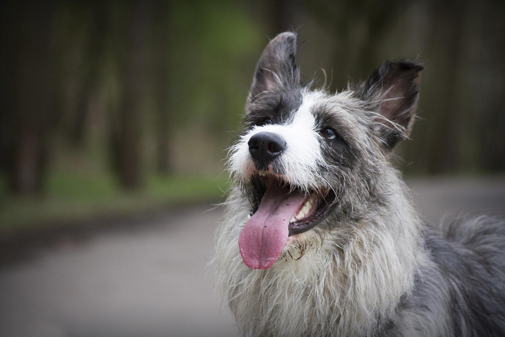 引き取り 保護 犬