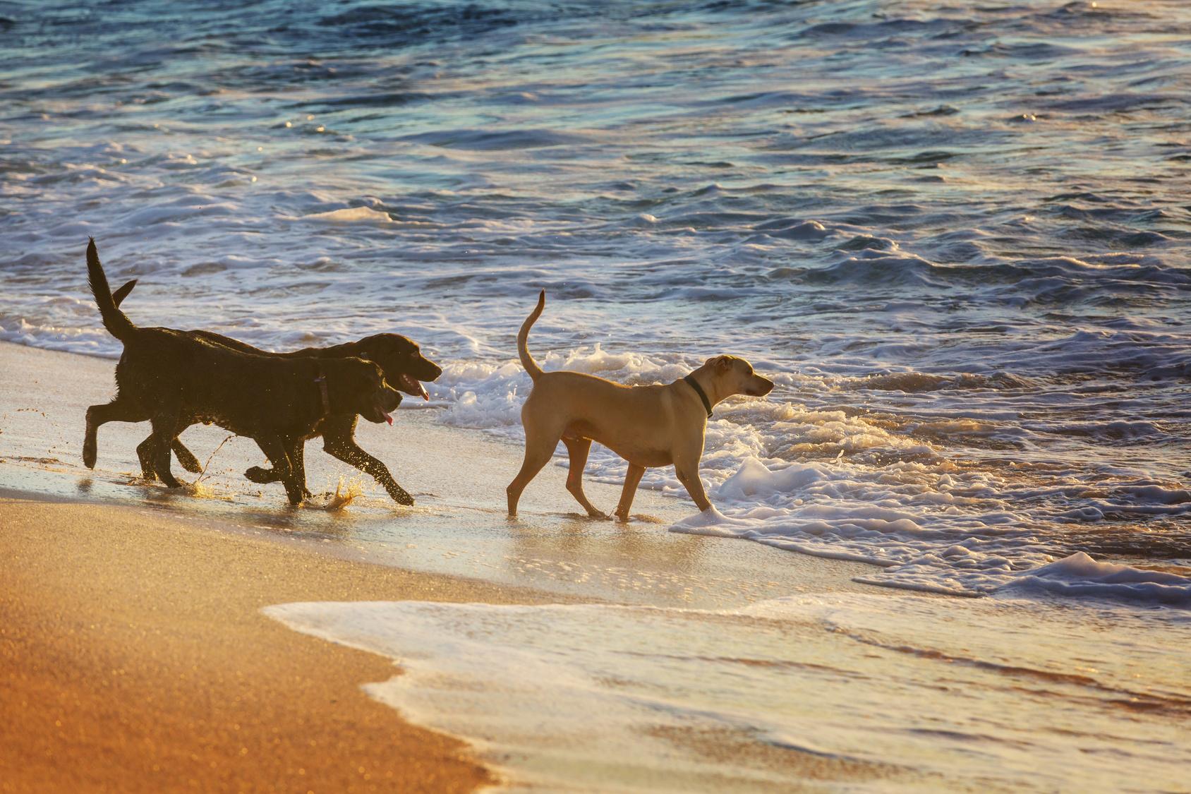 愛犬と沖縄旅行に行こう!おすすめホテルと観光地、注意したいことは?