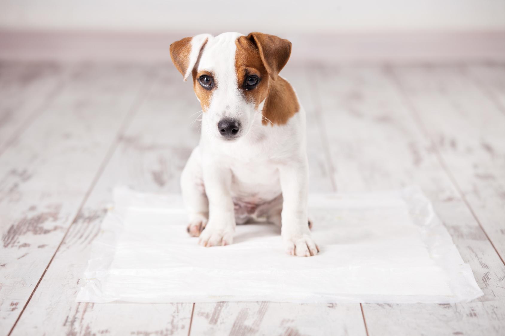 犬の多飲多尿は要注意だけど、実際どれくらいの量なの?