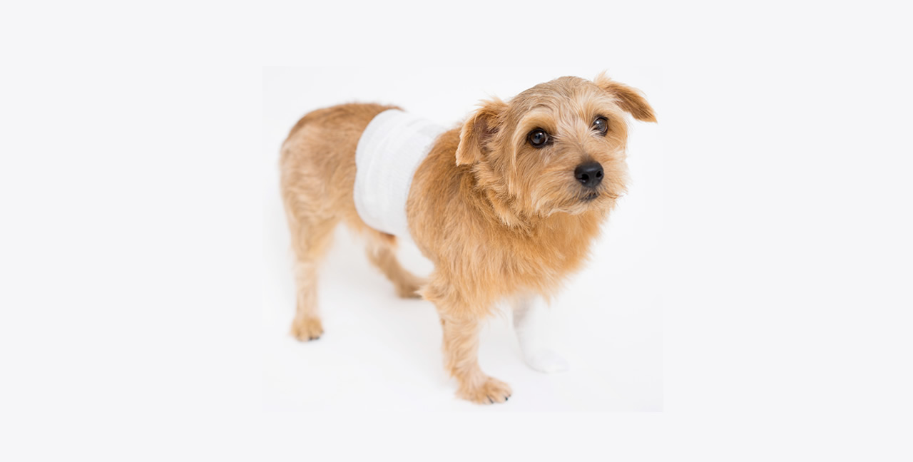 【PR】愛犬の多くが腰に問題を抱えている!その理由とは?!