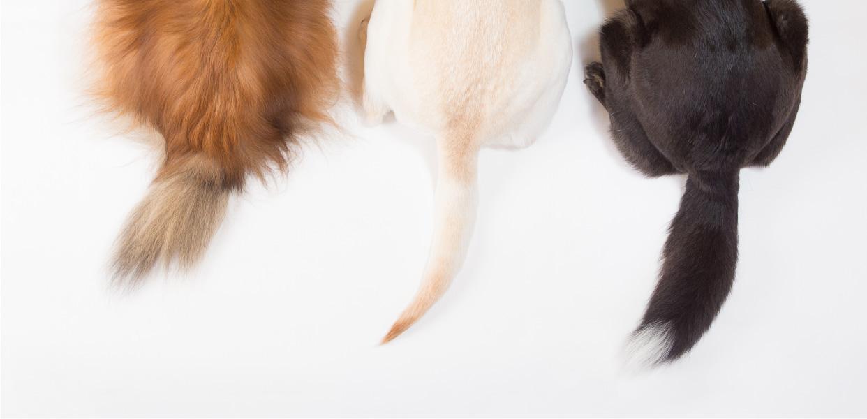 【横浜のおすすめおでかけスポット】愛犬のための国内最大級の室内ドッグラン!WANCOTT