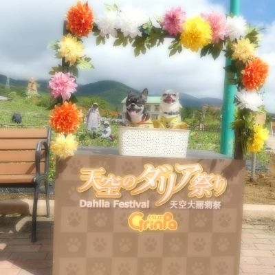 【静岡県のおすすめおでかけスポット】期間限定!天空のダリア祭りに行こう♪
