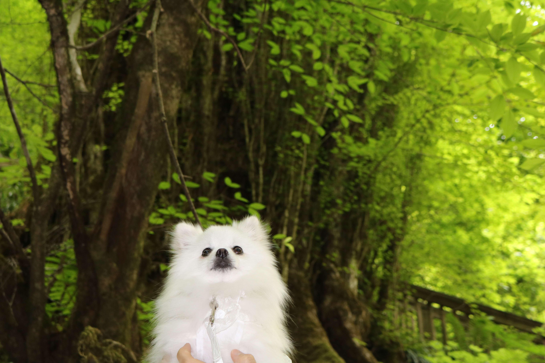 愛犬と一緒にトトロの森でハイキングを楽しもう♪【埼玉県のおでかけスポット】