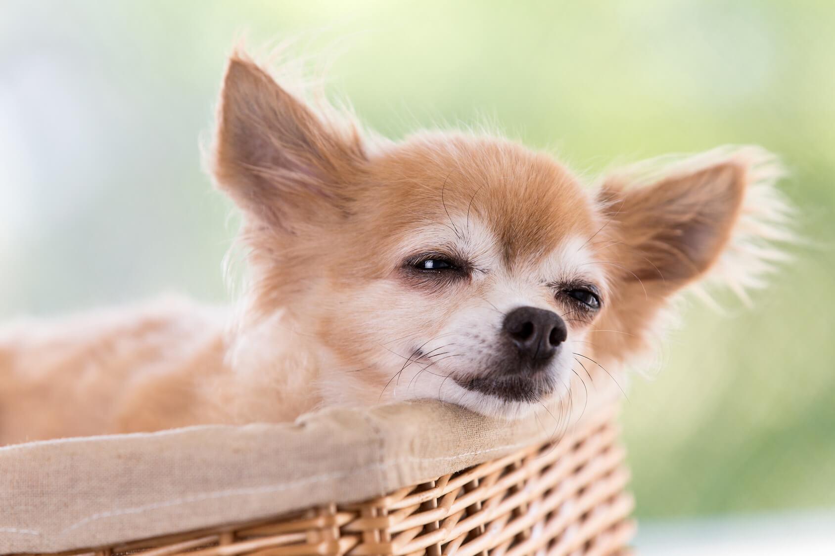 9月17日は敬老の日。愛犬が年をとったら気を付けたいこと。