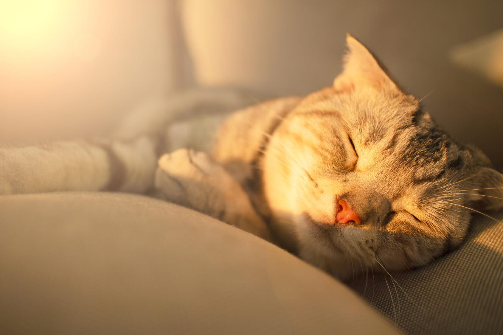 愛猫が年をとったら気を付けたいこと