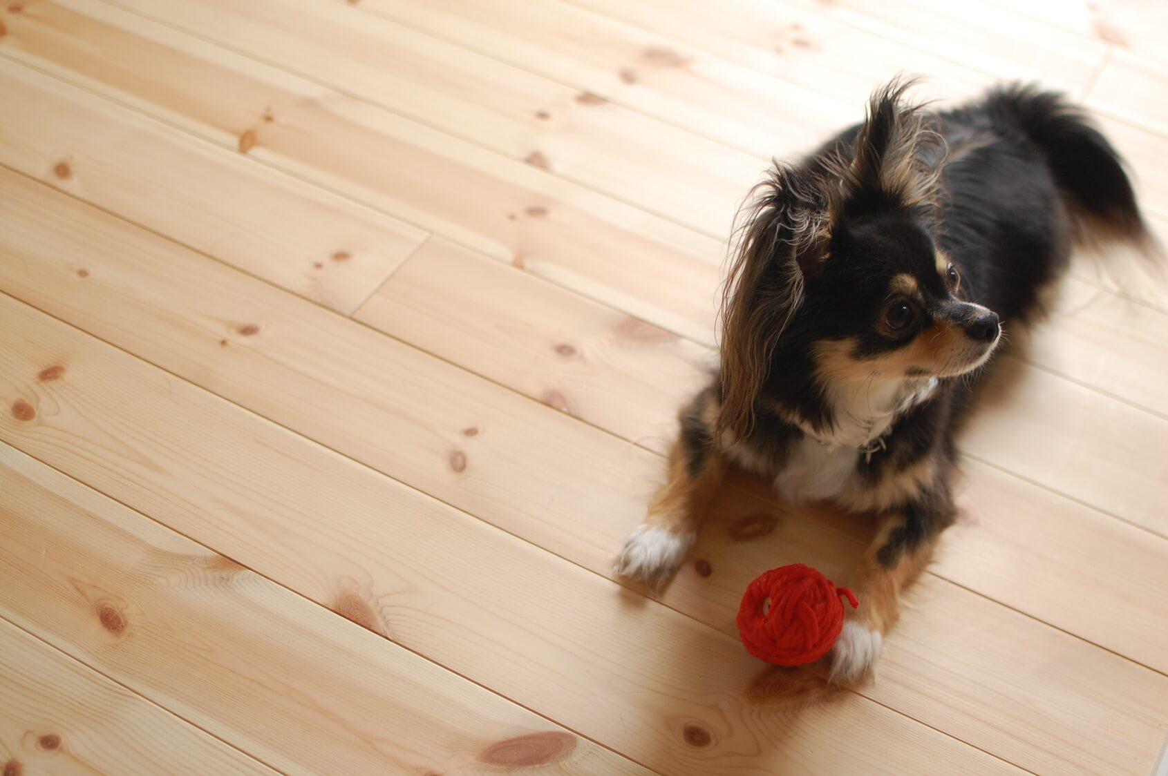 犬にも反抗期ってあるの?犬の反抗期におすすめの対応方法
