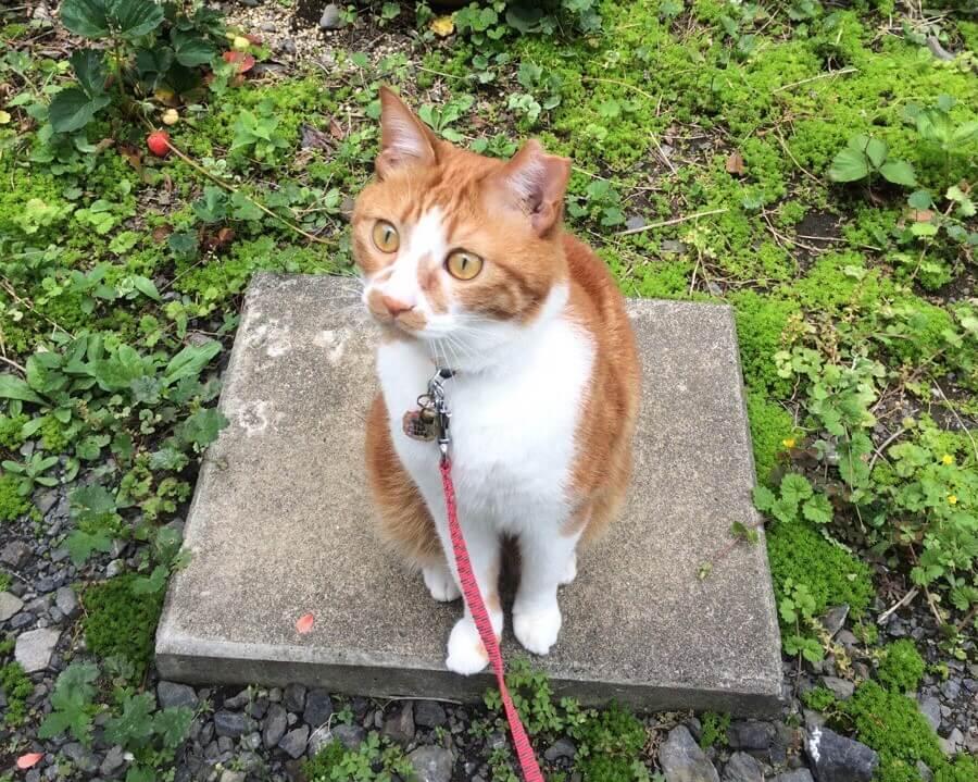 地域猫を知ろう!猫を守る「TNR」って知ってる?