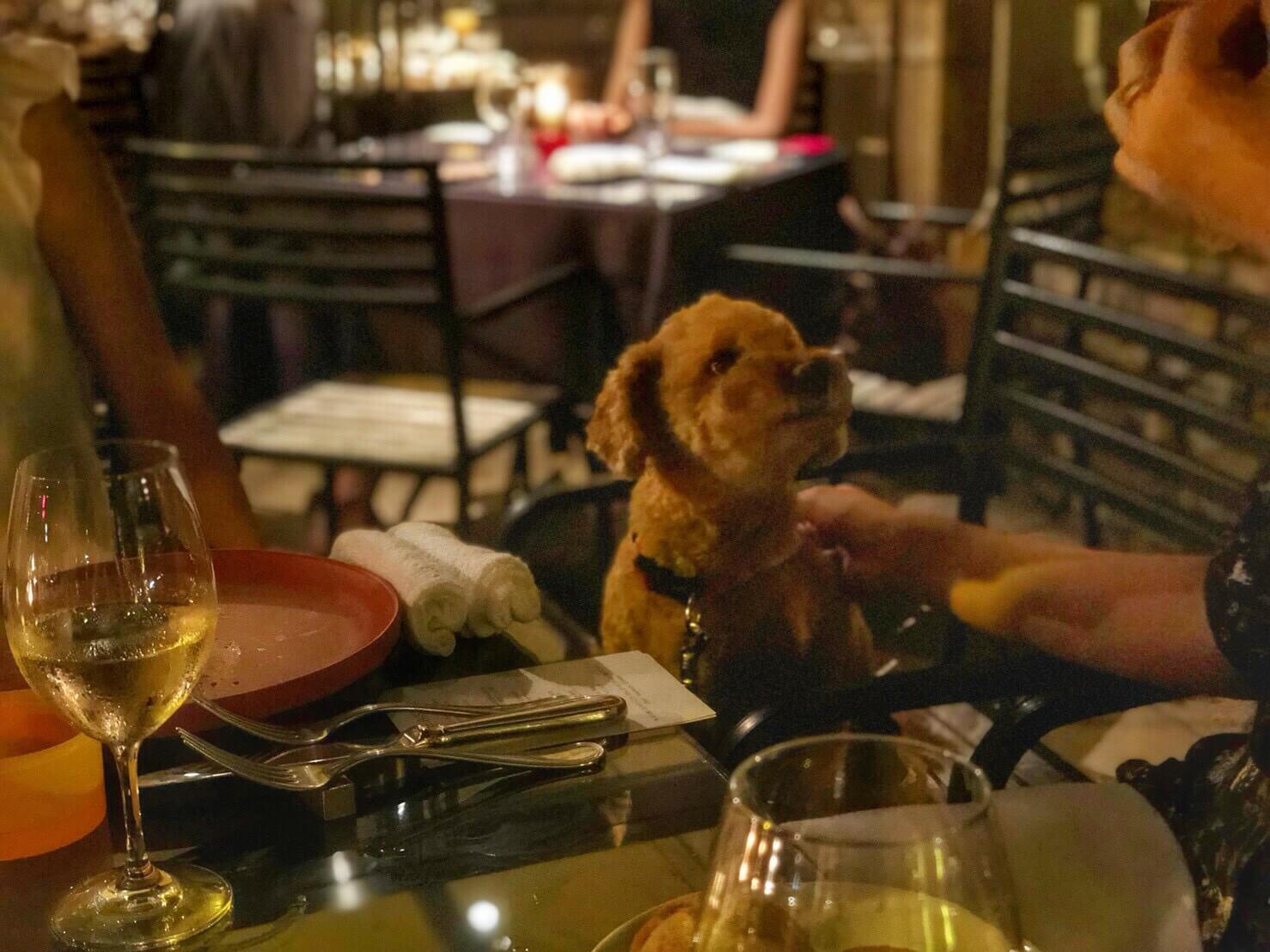 【PR】代官山の人気ビストロで愛犬と共に家族でディナーを。「BISTRO FAVORI 代官山(ビストロ ファヴォリ 代官山)」