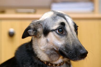 愛犬は飼い主を見た目で判断している?!変装をすると飼い主と判断できないって本当?