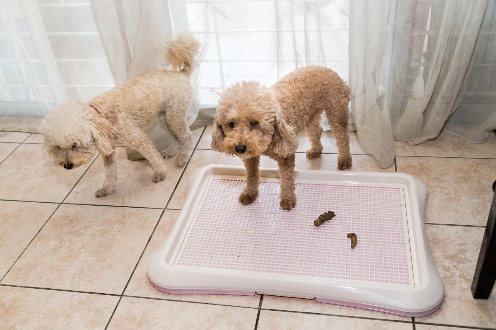 犬はどうして食糞をするの?犬がうんちを食べる理由とは?