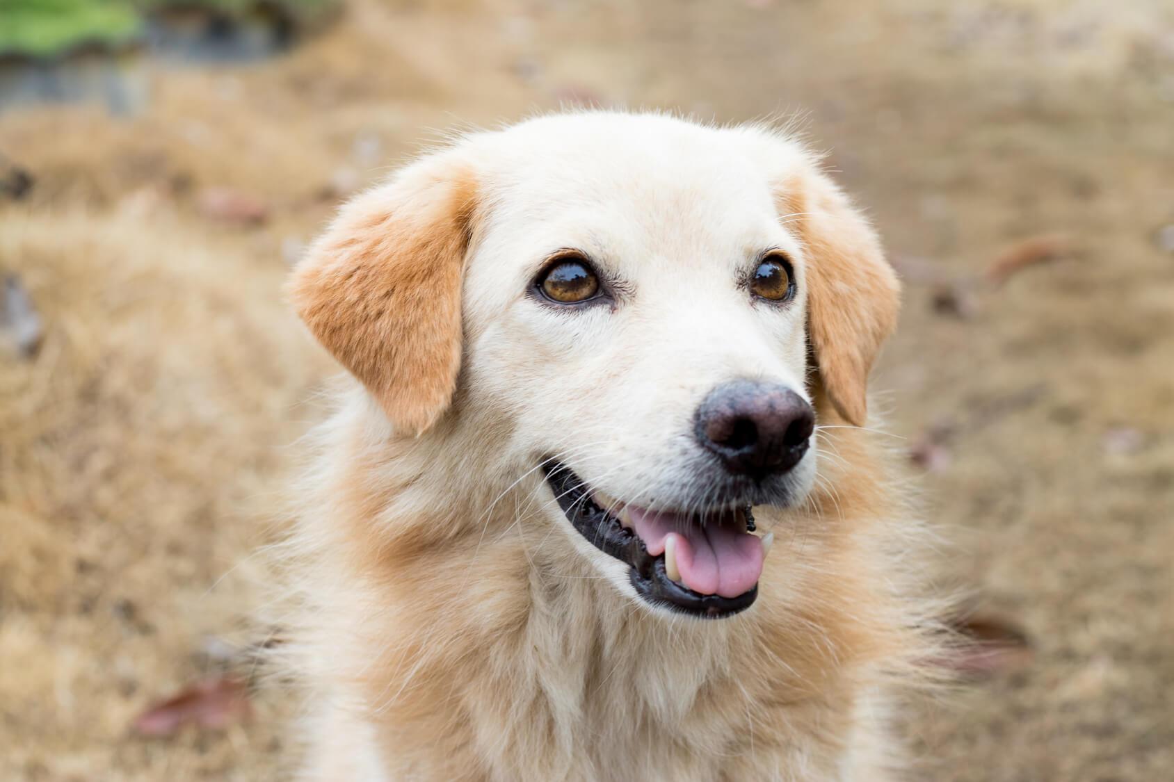 保護犬にだってこんなに可愛い!保護犬の魅力について