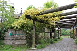 【栃木県のおすすめお出かけスポット】日光のレイクウッドリゾートで愛犬と紅葉を見ながら楽しもう