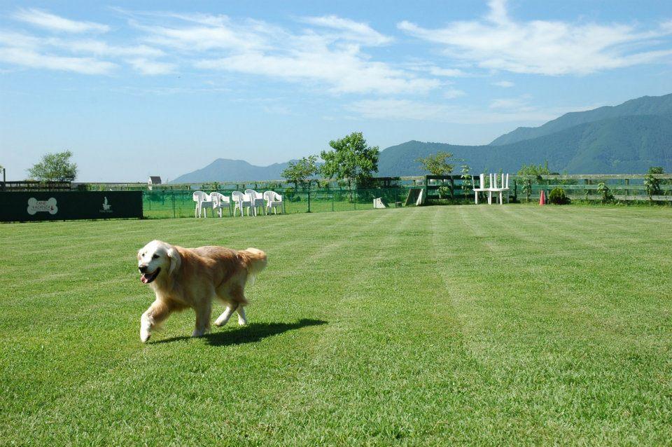 【静岡県のおすすめお出かけスポット】愛犬と朝霧フィールドドッグガーデンに行こう