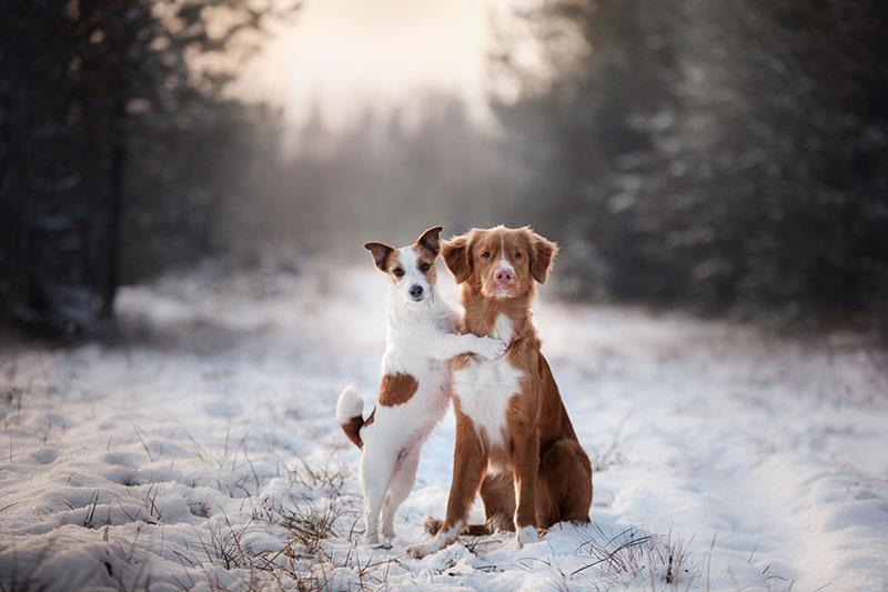 今の季節、犬は寒いと感じているの?人と犬の寒さの感じ方の違い
