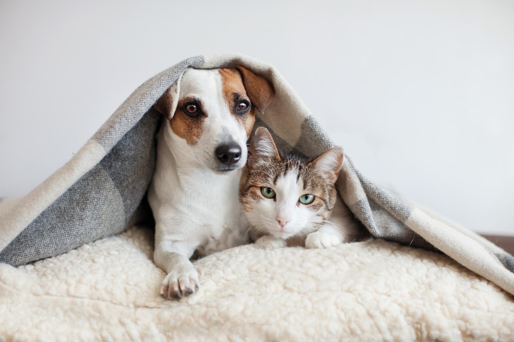 11月22日はペットに感謝する日(THANKS PETS DAY)。ペットにありがとうを伝える方法