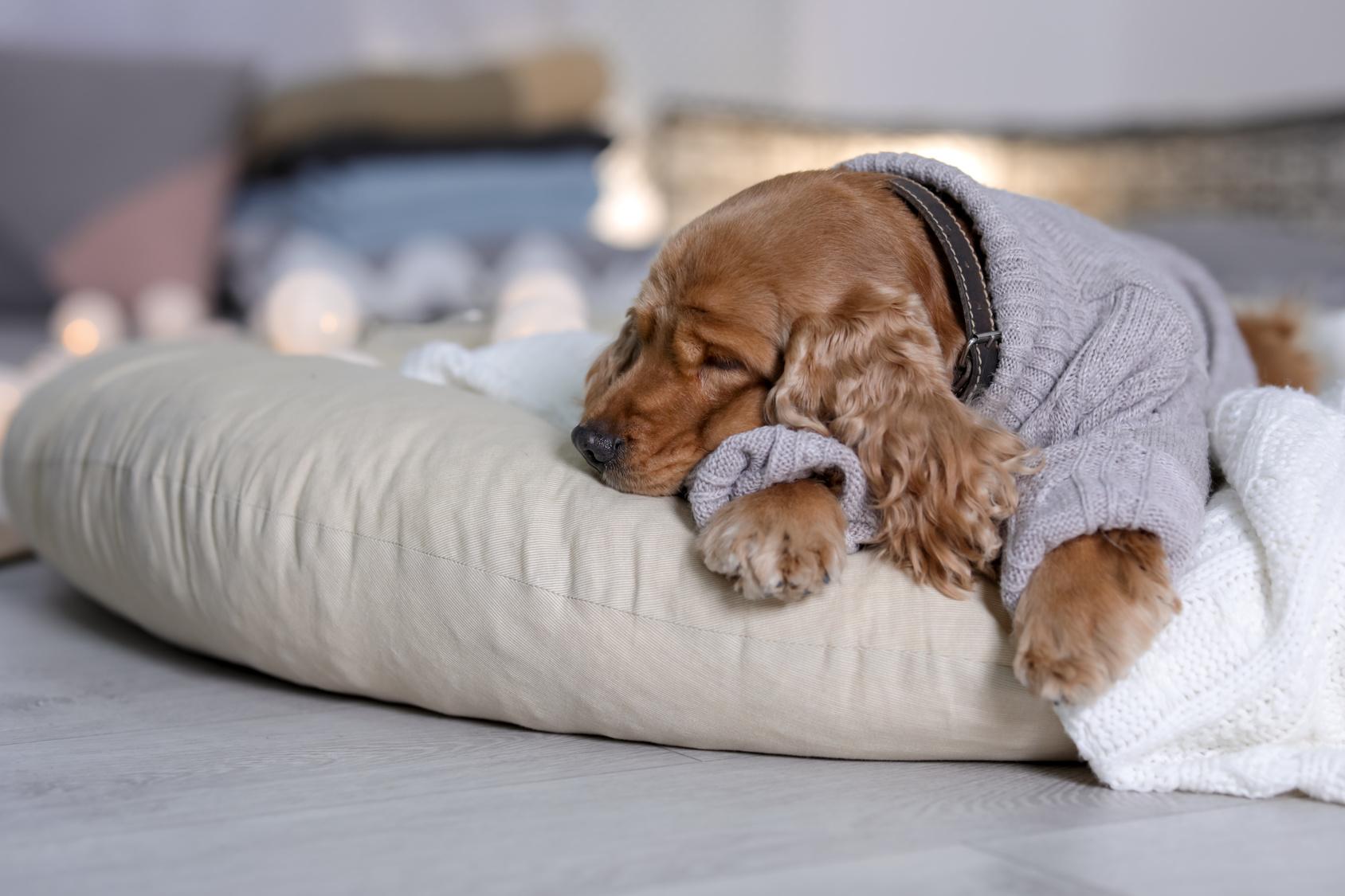 犬も風邪をひくことってあるの?犬風邪の症状と予防方法とは?