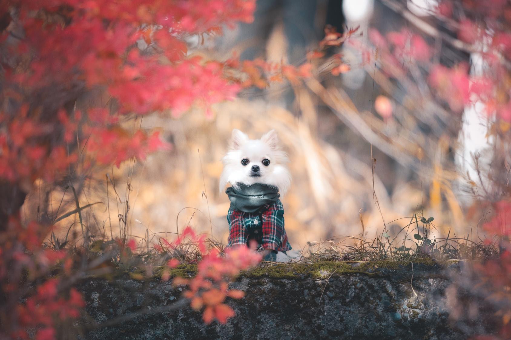 今が見ごろ!愛犬と紅葉狩りに行ける観光スポット8選【中部編】