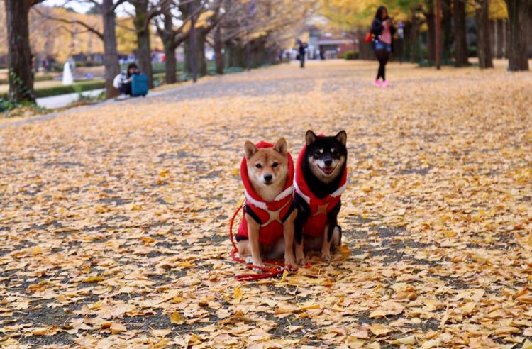 今が見ごろ!愛犬と紅葉狩りに行ける観光スポット8選【関東編】
