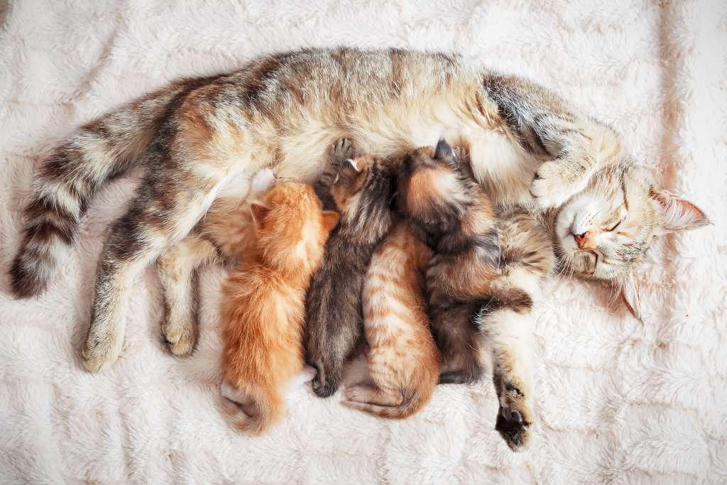 母猫からたっぷり愛情と母乳をもらった子猫の行動