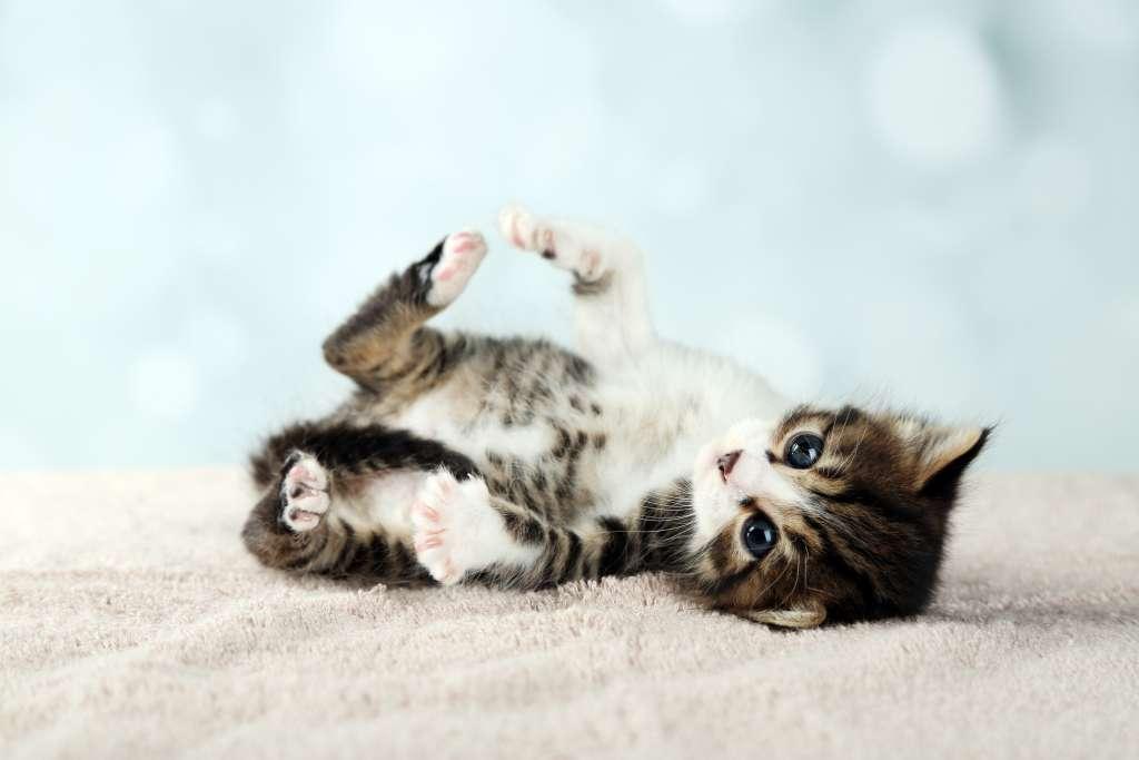 猫のもみもみ、ふみふみをやめさせたいなら