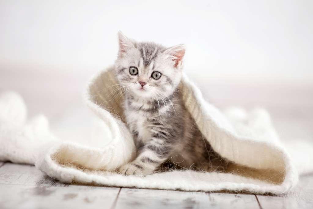 猫のもみもみ、ふみふみで気を付けたいこと