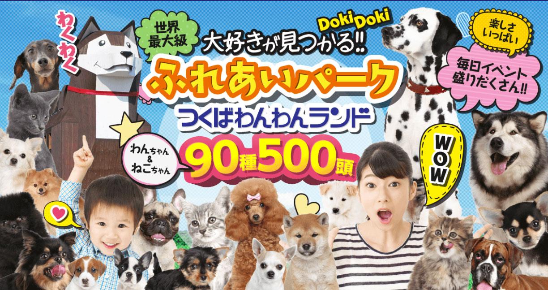 【茨城県のおすすめお出かけスポット】愛犬のためのテーマパーク、つくばわんわんランドに行こう!