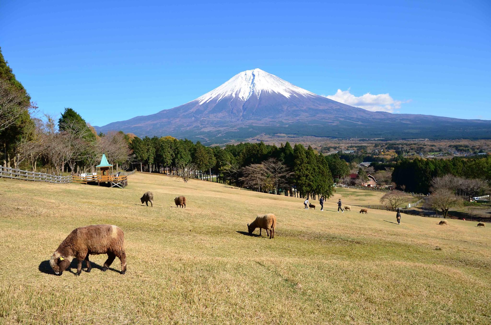 【静岡県のおすすめお出かけスポット】愛犬とまかいの牧場に行こう!