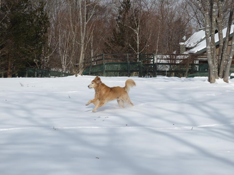 愛犬と行く!関東の雪遊びができるドッグラン&お出かけスポット8選