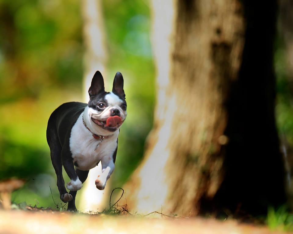【静岡県のおすすめお出かけスポット】愛犬と伊豆高原わんこの森に行こう