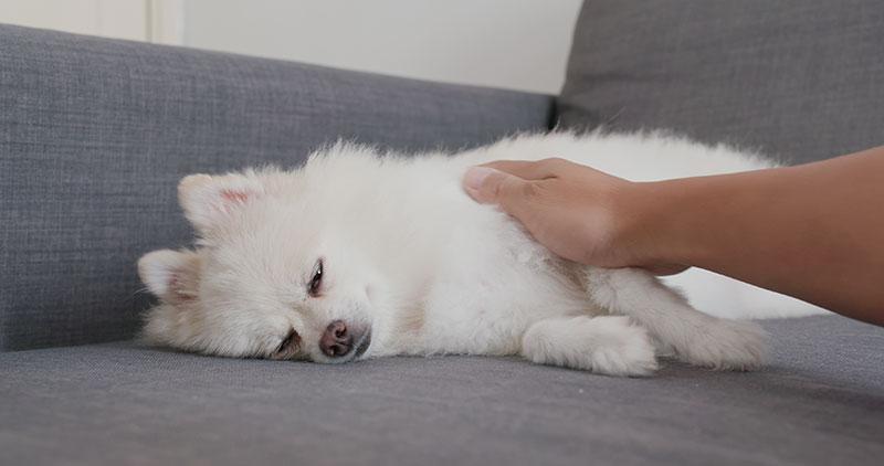 犬の三大死因のひとつ、ガンになるとどうなるの?!