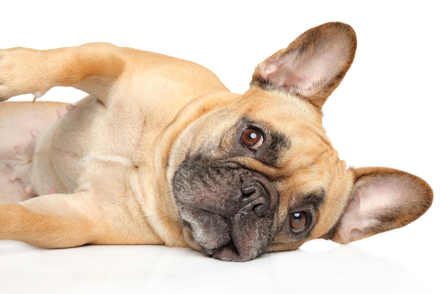 犬を飼ったらできなくなる5つのこと