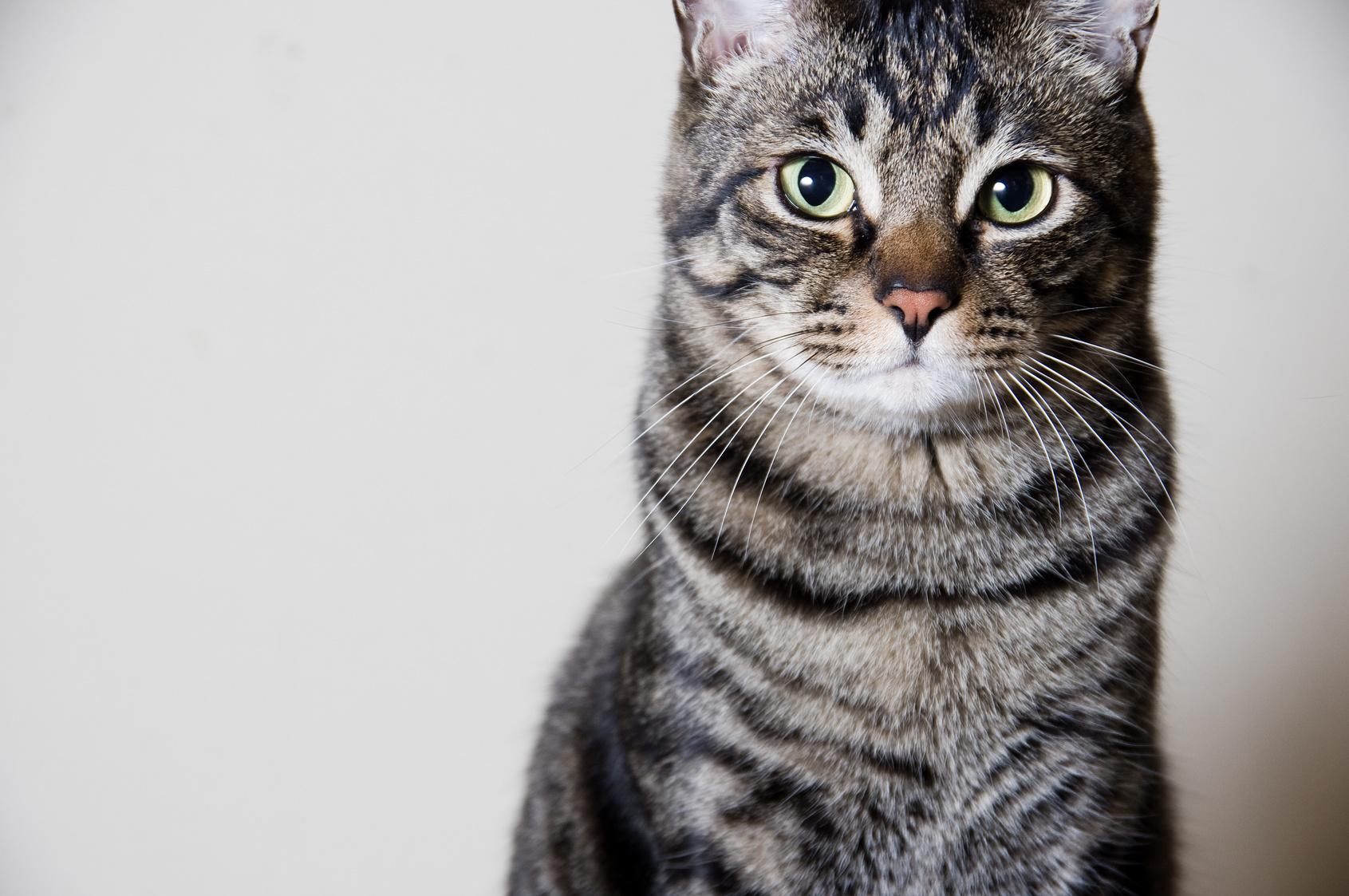 猫が飼い主にイラッとする瞬間6つ!愛猫のイヤイヤポイントを知ろう