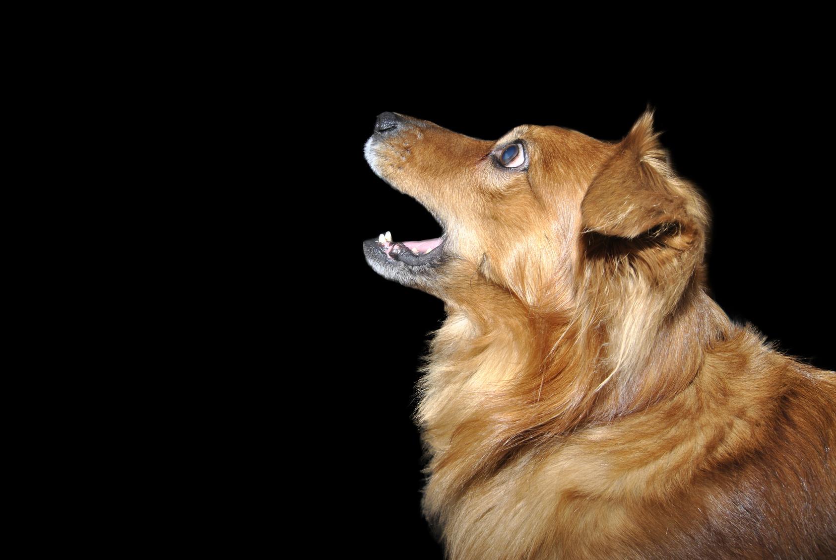 犬の五感。人との違いを比較してみよう