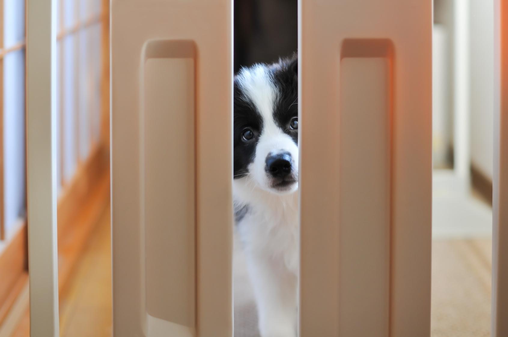 愛犬の留守番中のいたずら…実は、飼い主の愛情不足かも!?