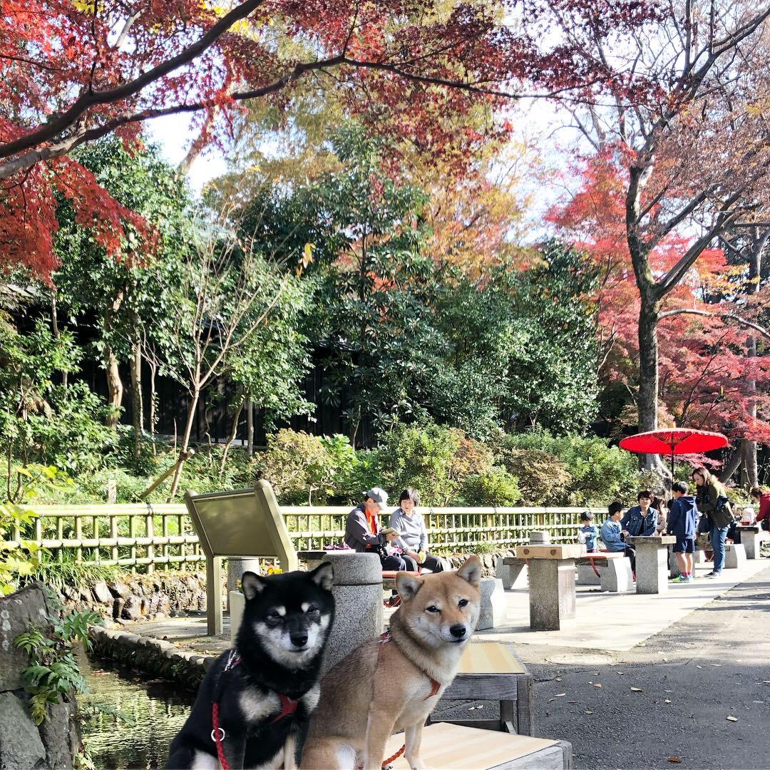 【東京都のおすすめおでかけエリア】愛犬と行く穴場スポット、深大寺にお出かけしよう