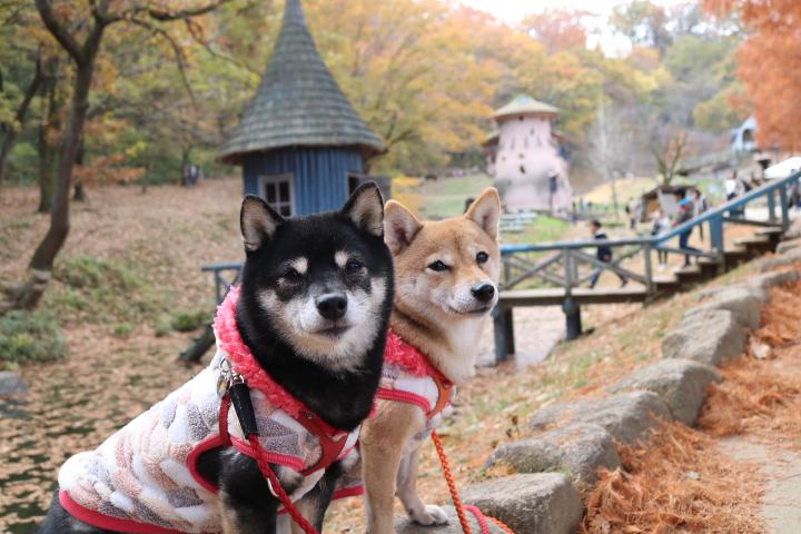 愛犬大歓迎のインスタ映えスポット!埼玉県のトーベヤンソンあけぼの子どもの森公園に行こう