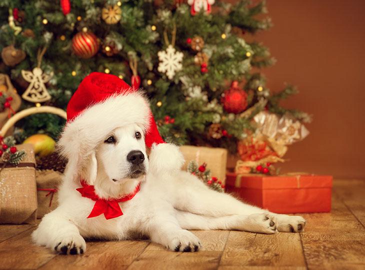 愛犬と過ごすクリスマスの楽しみ方【クリスマスディナーレシピ公開】