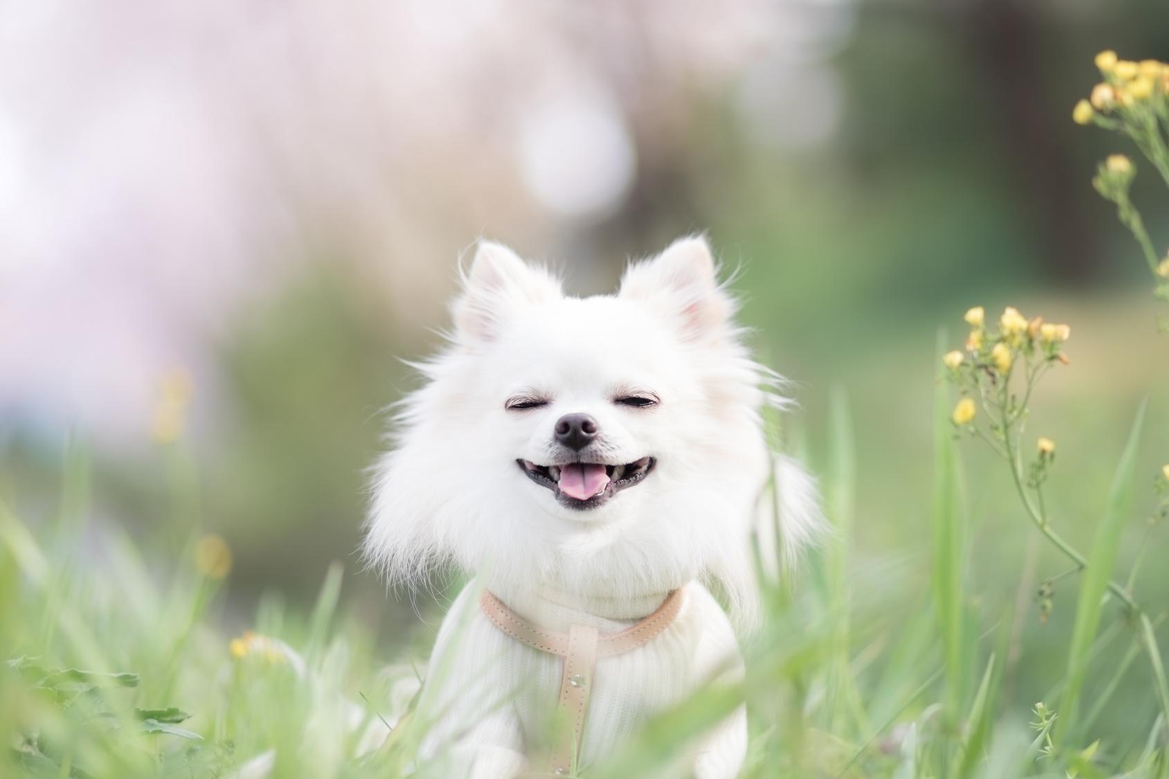 あなたが大好き!大好きな人の前でのみ見せる愛犬のしぐさ