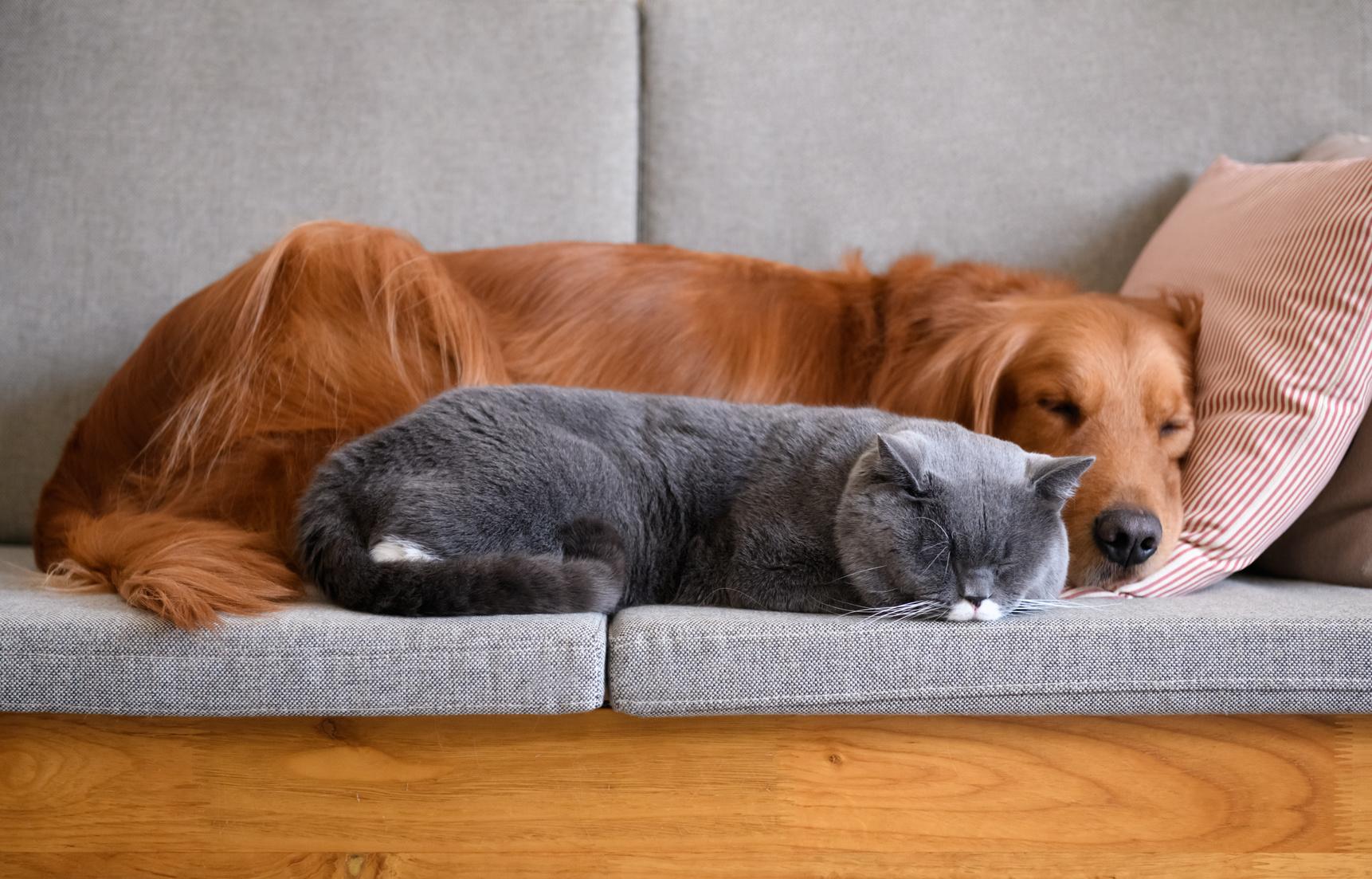 犬や猫が大好き!ペットと関わる仕事がしたい。動物関係の仕事はどれぐらいあるの?