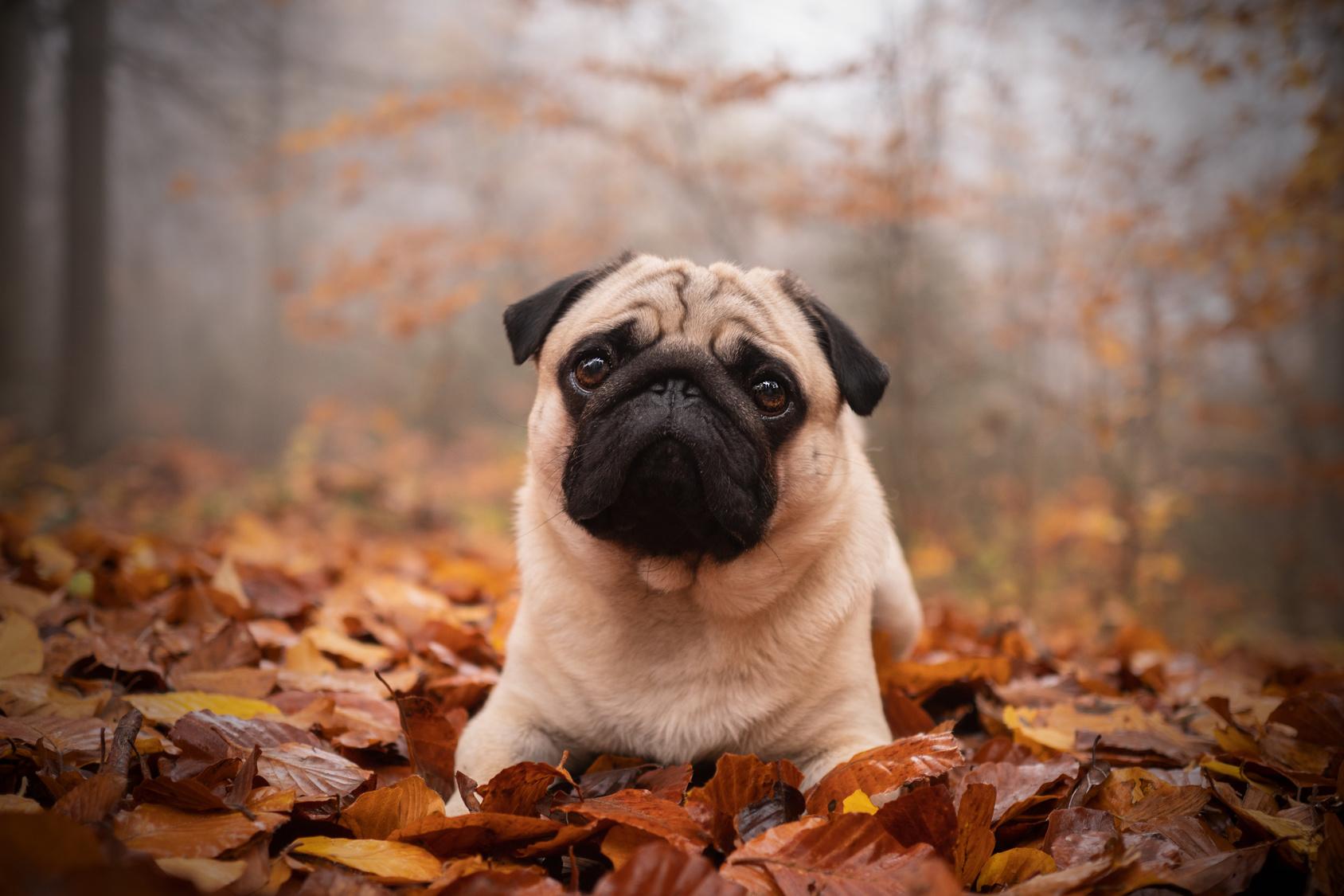 冬は愛犬が痩せやすい季節?!痩せる理由と冬痩せ対策とは?!【レシピ公開】