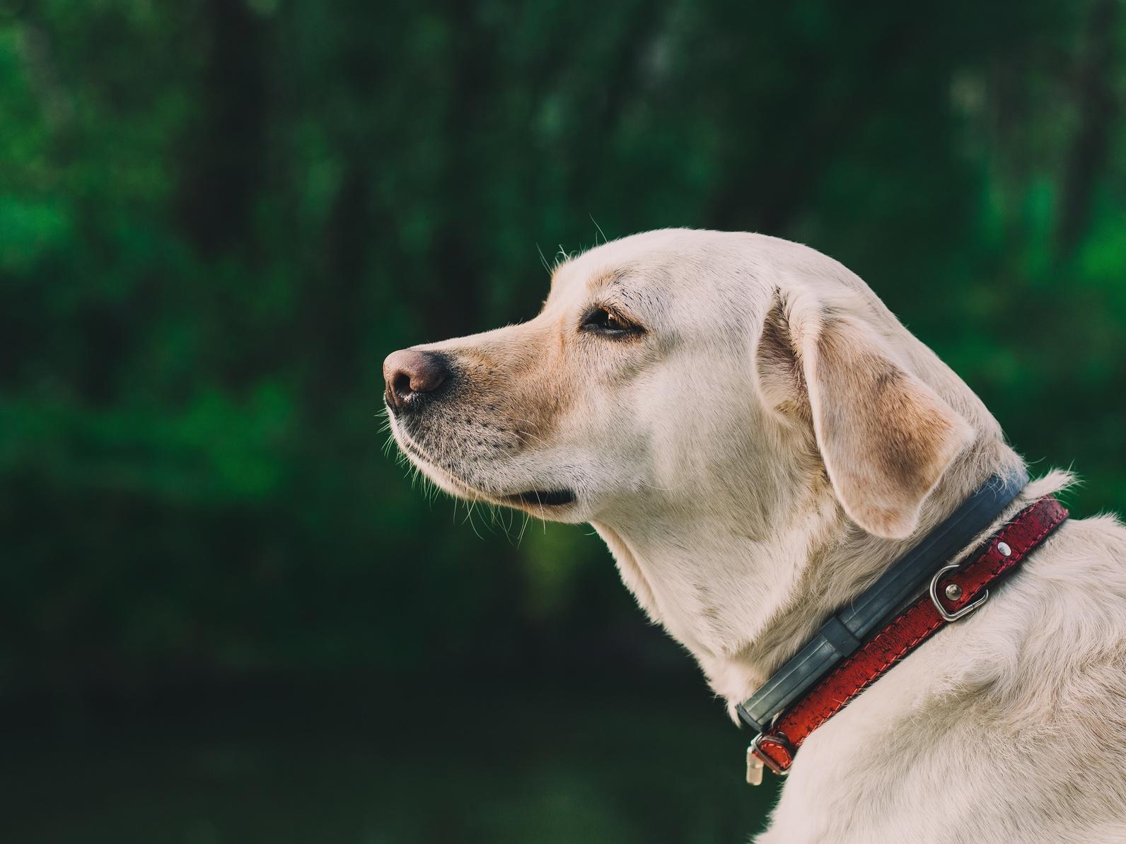 日本と海外を比べてみよう!人気の犬種ランキングトップ3!