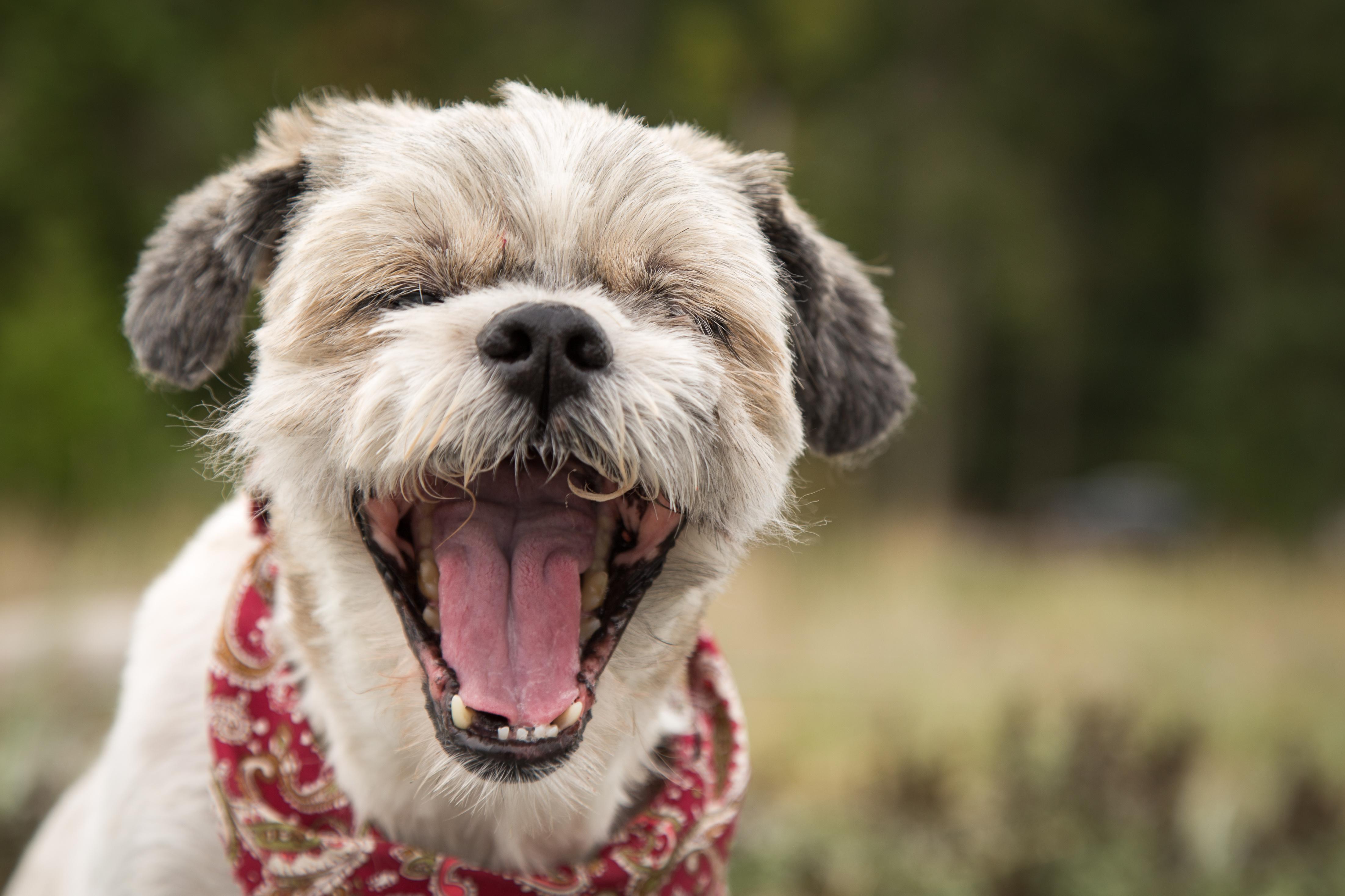 犬の花粉症に要注意!犬の花粉症はどんな症状がでるの?!