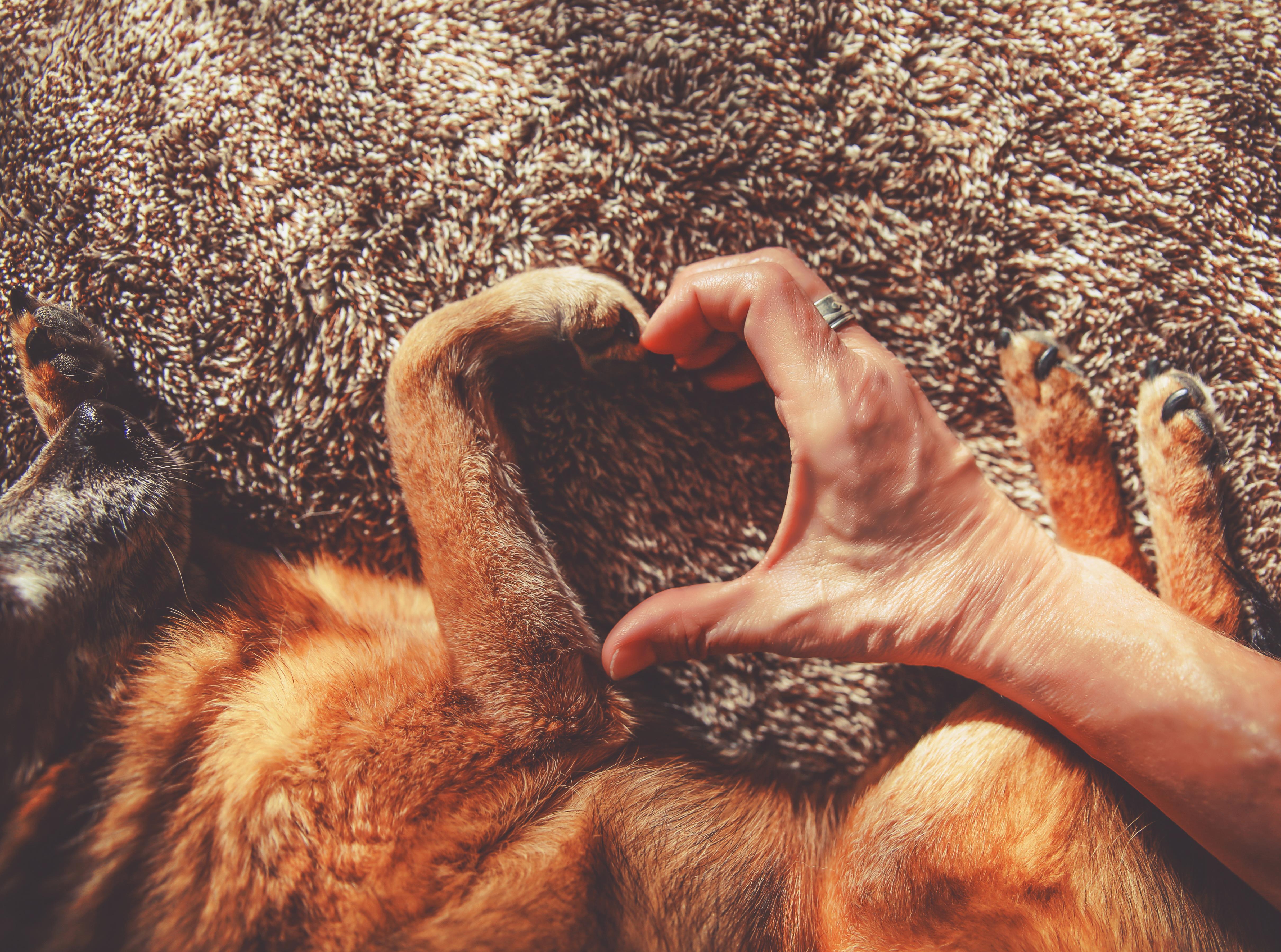 愛犬が大好きな飼い主にのみ行う6つの愛情表現