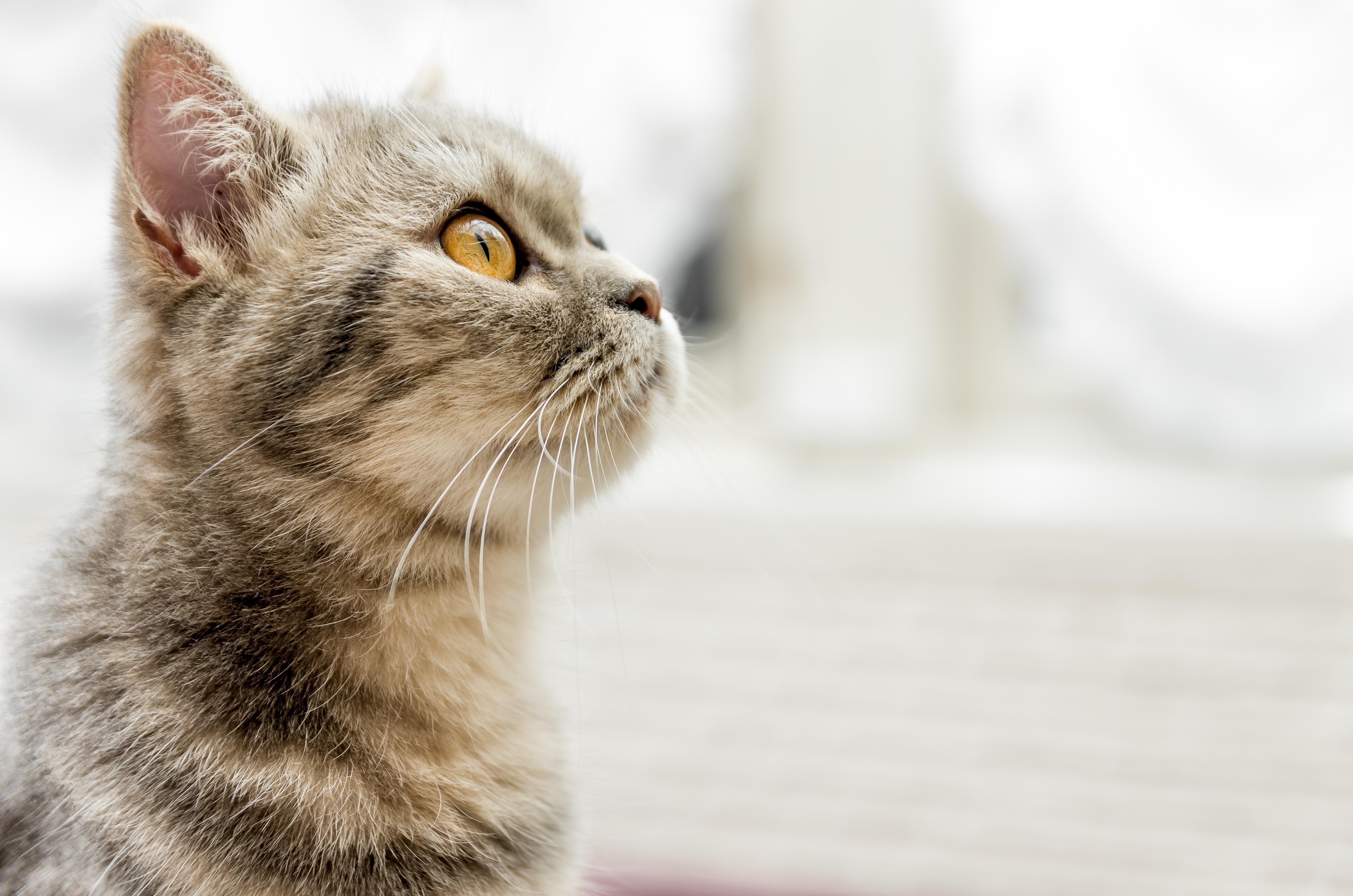 2月22日は猫の日♪2019年猫の名前ランキング発表!!今年はどんな名前が1位!?