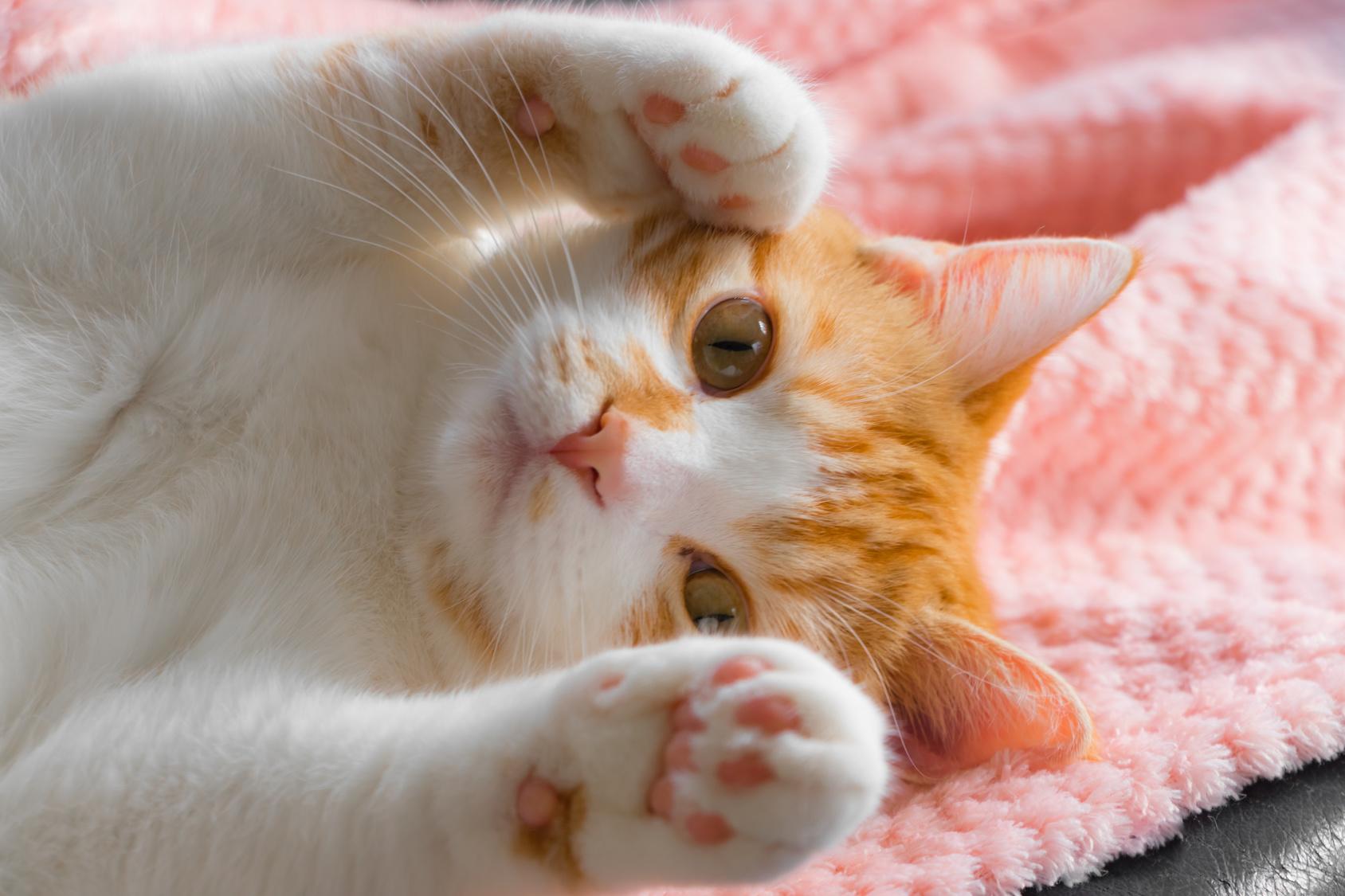 愛猫から伝える飼い主へのメッセージ。猫が甘えたいときにみせる5つのサイン
