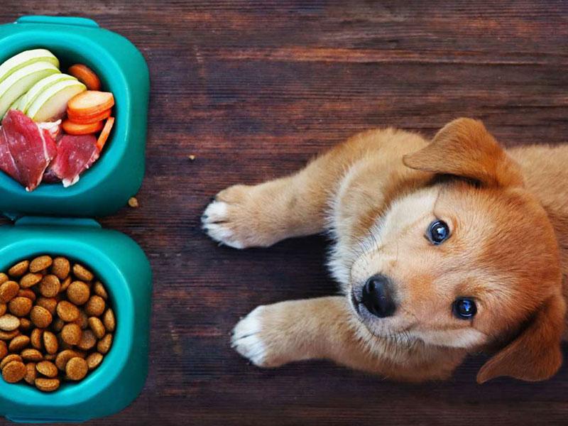 11月29日はいい肉の日。愛犬にお肉をあげよう。お肉の適切な与え方とは?