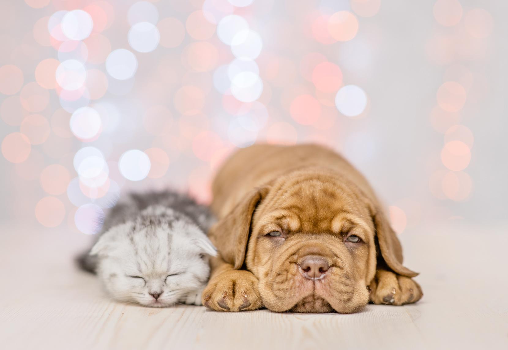 あなたの愛犬・愛猫が食べているペットフードは大丈夫?危険な添加物を知って愛犬・愛猫の健康を守ろう