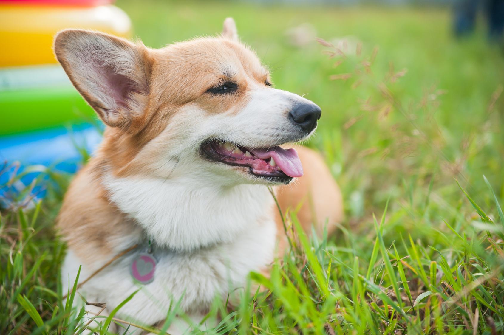 愛犬と温泉旅行に行きたい!愛犬といっしょに温泉に入れる温泉宿3選