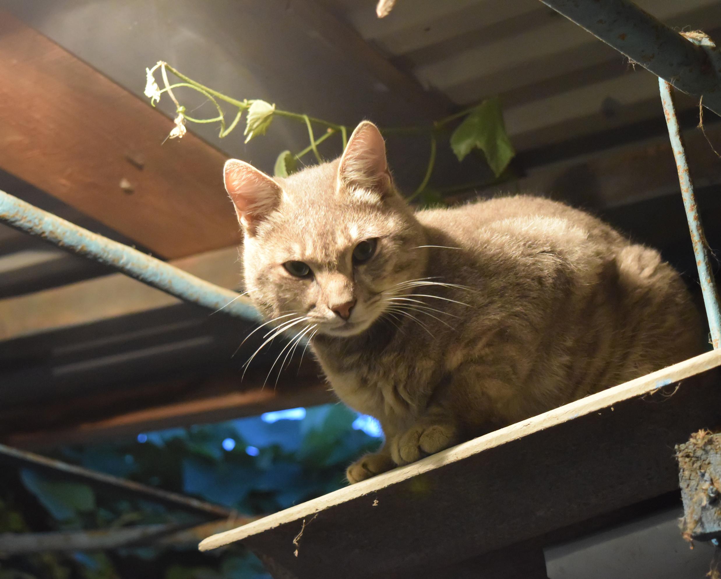 愛猫の夜の大運動会…なんとかできないの?夜の運動会の解決方法
