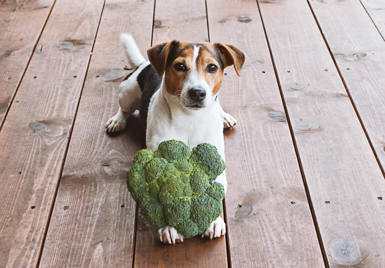 犬はブロッコリーを食べても大丈夫?